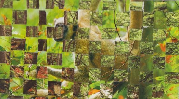 Woven Jungle