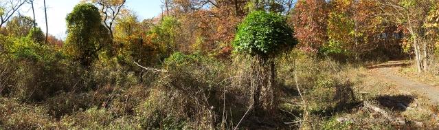 Treescape 5